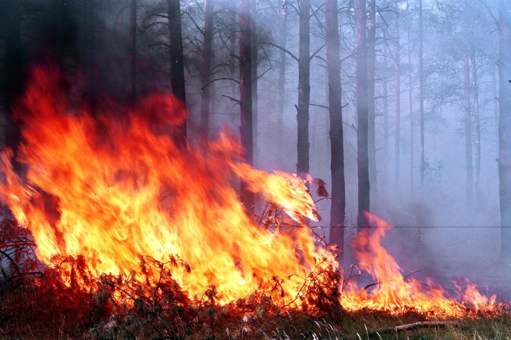 В Молдове объявлен «Желтый код» метеоопасности в связи с высокими температурами